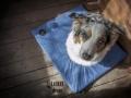 legowisko domek mata dla psa kota kanapa lauren design (12)
