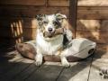 legowisko domek mata dla psa kota kanapa lauren design (13)