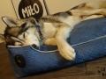 legowisko domek mata dla psa kota kanapa lauren design (15)