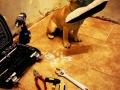 legowisko domek mata dla psa kota kanapa lauren design (16)