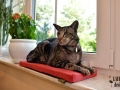legowisko domek mata dla psa kota kanapa lauren design (18)