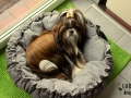 legowisko domek mata dla psa kota kanapa lauren design (2)