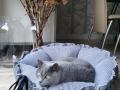 legowisko domek mata dla psa kota kanapa lauren design (20)