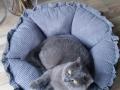legowisko domek mata dla psa kota kanapa lauren design (21)