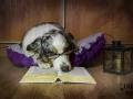 legowisko domek mata dla psa kota kanapa lauren design (23)