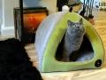 legowisko domek mata dla psa kota kanapa lauren design (24)