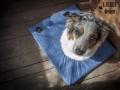 legowisko domek mata dla psa kota kanapa lauren design (25)