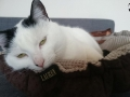 legowisko domek mata dla psa kota kanapa lauren design (26)