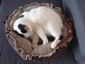 legowisko domek mata dla psa kota kanapa lauren design (27)