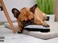 legowisko domek mata dla psa kota kanapa lauren design (28)
