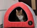 legowisko domek mata dla psa kota kanapa lauren design (29)