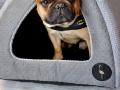 legowisko domek mata dla psa kota kanapa lauren design (31)