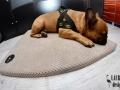 legowisko domek mata dla psa kota kanapa lauren design (33)