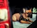 legowisko domek mata dla psa kota kanapa lauren design (34)