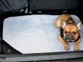 legowisko domek mata dla psa kota kanapa lauren design (35)