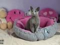 legowisko domek mata dla psa kota kanapa lauren design (36)