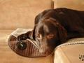 legowisko domek mata dla psa kota kanapa lauren design (37)