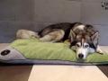 legowisko domek mata dla psa kota kanapa lauren design (39)