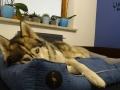 legowisko domek mata dla psa kota kanapa lauren design (40)