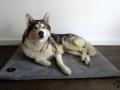 legowisko domek mata dla psa kota kanapa lauren design (42)