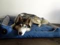 legowisko domek mata dla psa kota kanapa lauren design (43)