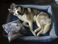 legowisko domek mata dla psa kota kanapa lauren design (44)