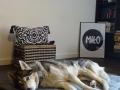 legowisko domek mata dla psa kota kanapa lauren design (46)