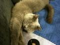 legowisko domek mata dla psa kota kanapa lauren design (47)