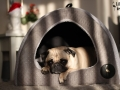 legowisko domek mata dla psa kota kanapa lauren design (48)