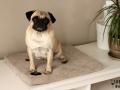 legowisko domek mata dla psa kota kanapa lauren design (50)