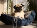 legowisko domek mata dla psa kota kanapa lauren design (51)