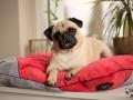 legowisko domek mata dla psa kota kanapa lauren design (52)