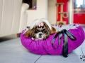 legowisko domek mata dla psa kota kanapa lauren design (59)