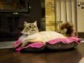 legowisko domek mata dla psa kota kanapa lauren design (6)