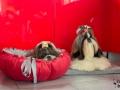 legowisko domek mata dla psa kota kanapa lauren design (62)