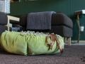 legowisko domek mata dla psa kota kanapa lauren design (63)