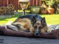 legowisko domek mata dla psa kota kanapa lauren design (66)
