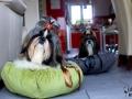 legowisko domek mata dla psa kota kanapa lauren design (67)