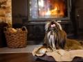 legowisko domek mata dla psa kota kanapa lauren design (8)