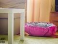 legowisko domek mata dla psa kota kanapa lauren design (9)
