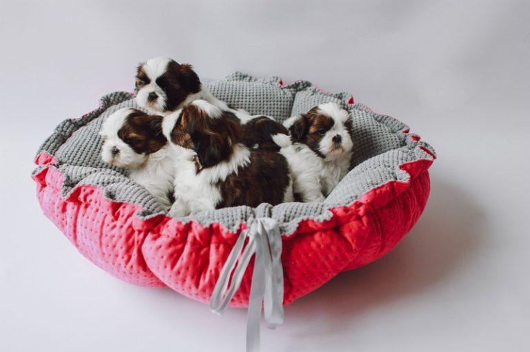 produkt roku legowisko daisy dla psa kota lauren design zoo branża
