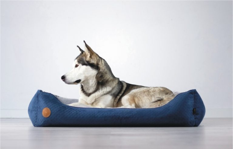 kanapa legowisko kojec dla psa kota lauren design producent legowisk